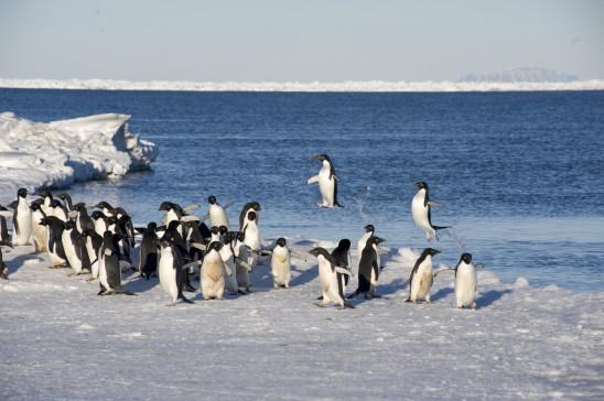 Sendungsbild: Eisige Welten: Wettlauf gegen die Kälte