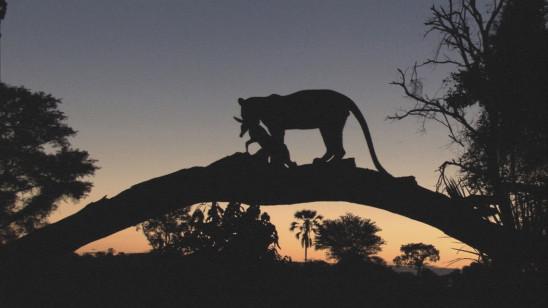 Sendungsbild: Erste Schritte – Ein Leopardenleben