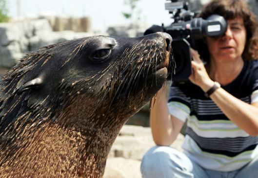 Sendungsbild: Seehund, Puma & Co.