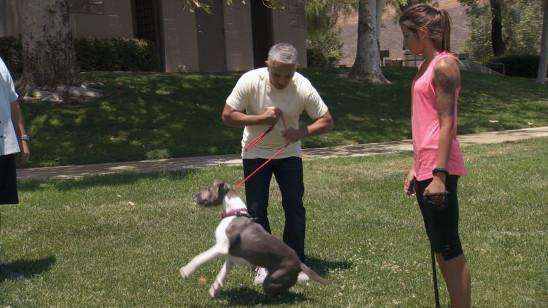 Sendungsbild: Notruf Hund – Einsatz für Cesar