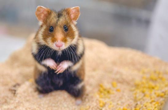 Sendungsbild: Der kleine Held vom Hamsterfeld