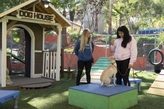 Sendungsbild: Cesar Millan: Guter Mensch, guter Hund