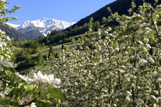 Sendungsbild: Südtirol