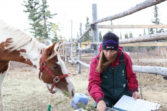 Sendungsbild: Die Yukon-Tierärztin