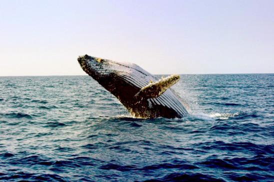 Sendungsbild: Mythos Wal