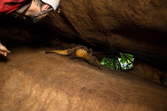 Sendungsbild: Die Höhlenkrokodile von Gabun