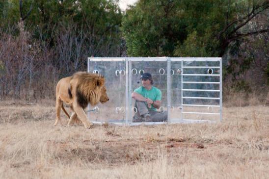 Sendungsbild: Mann gegen Löwe