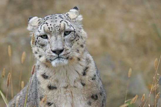 Sendungsbild: Leopard, Seebär & Co.