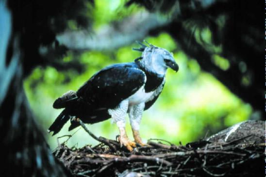 Sendungsbild: Tief im Regenwald