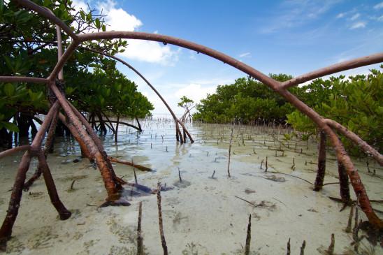Sendungsbild: Im Bann der Bahamas