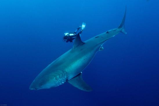 Sendungsbild: Die Jäger des Mittelmeeres: Haie vom Aussterben bedroht