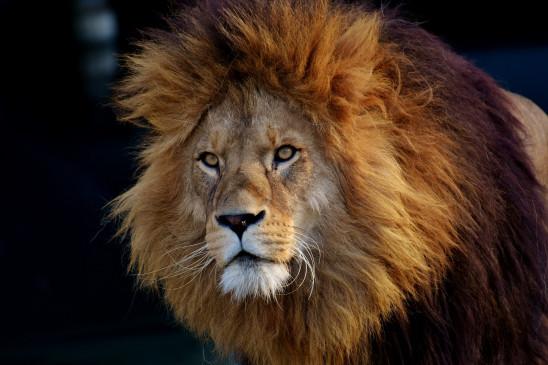 Sendungsbild: Wilde Überlebenskünstler – Wie Tiere bauen