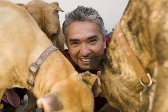 Sendungsbild: Der Hundeflüsterer