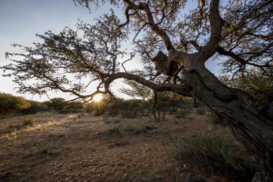 Sendungsbild: Wüste Wurzeln, starke Stämme