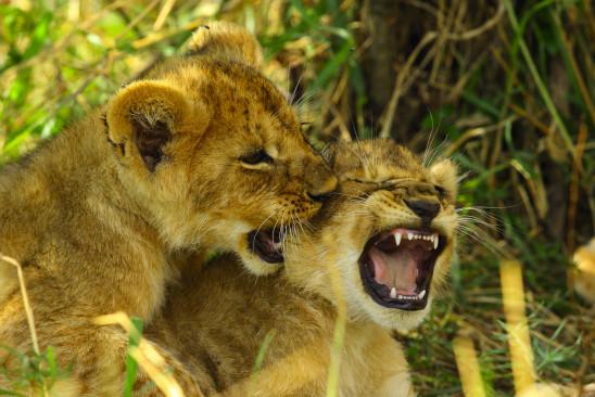 Sendungsbild: Das Tal der Löwen