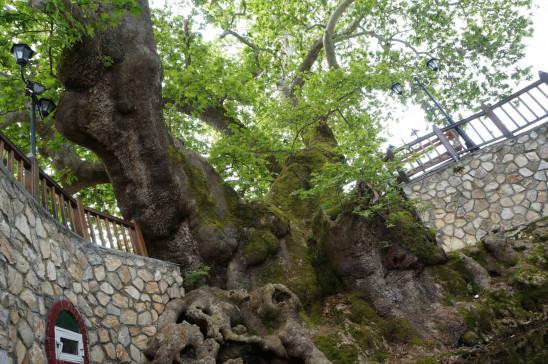 Sendungsbild: Ein Traum von Baum