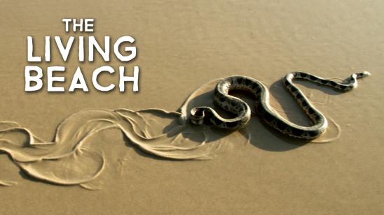 Sendungsbild: Lebendiger Strand