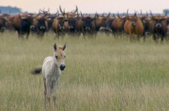 Sendungsbild: Theos Tierwelt