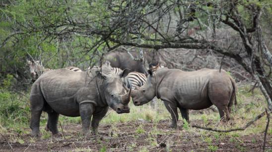 Sendungsbild: Wildes Südafrika