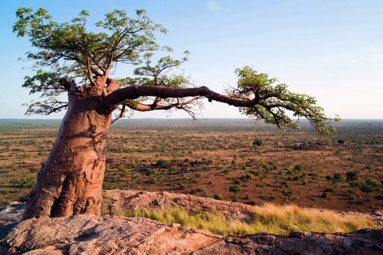 Sendungsbild: Faszination Afrika