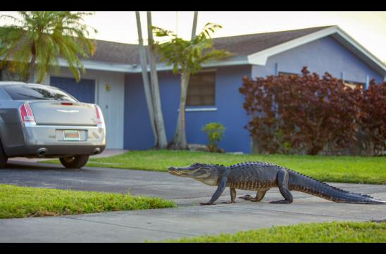 Sendungsbild: Tierisch urban