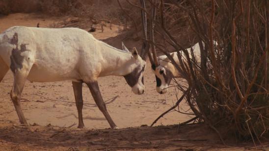 Sendungsbild: Faszinierende Erde: Wüsten