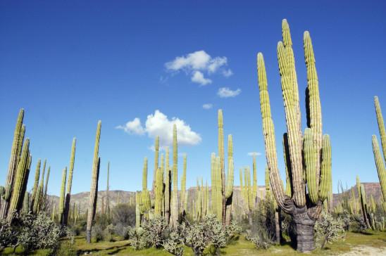 Sendungsbild: Baja California – Das andere Kalifornien