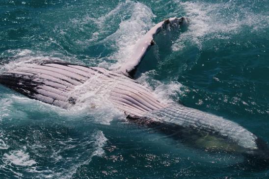 Sendungsbild: Wo die Wale zur Welt kommen