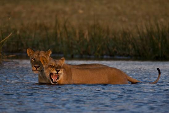 Sendungsbild: Heimkehr der Löwen
