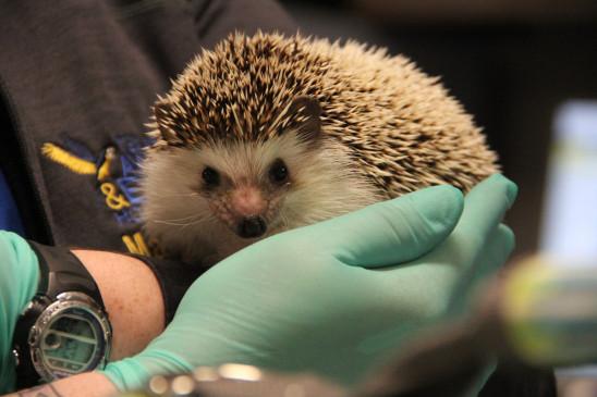 Sendungsbild: Dr. Ts tierische Notaufnahme
