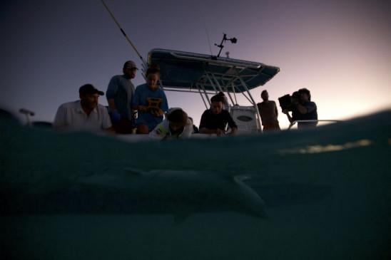 Sendungsbild: Zeb Hogans Monsterfische: Hammerhai