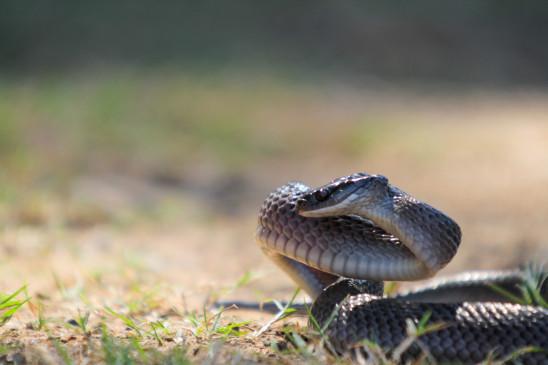 Sendungsbild: Schlangen-Alarm – Einsatz in der Nachbarschaft
