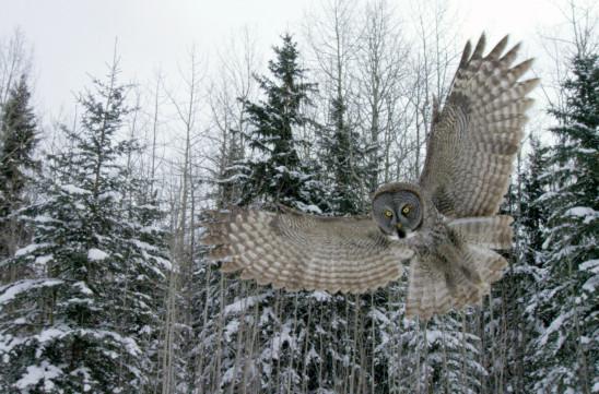 Sendungsbild: Ein Jahr in Kanadas Wildnis
