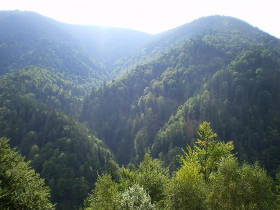 Sendungsbild: Europas Urwälder: Wilde Karpaten