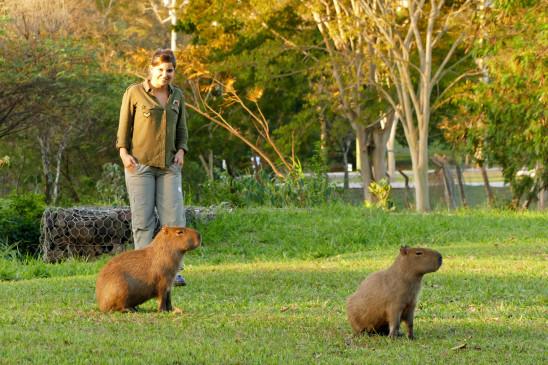 Sendungsbild: Anna und die wilden Tiere