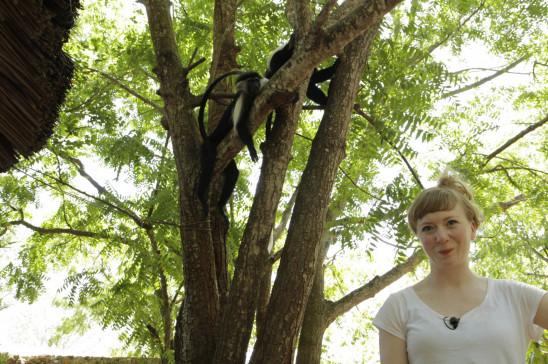 Sendungsbild: Paula und die wilden Tiere