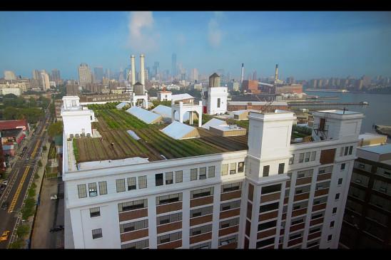 Sendungsbild: Auf den Dächern der Stadt