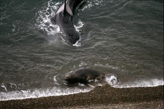Sendungsbild: Fabelhafte Welt der Wale