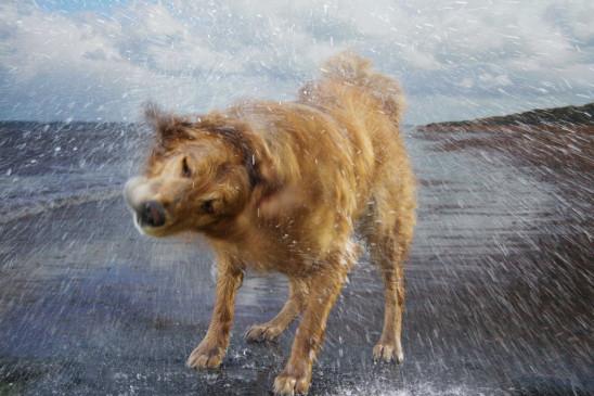 Sendungsbild: Die geheime Welt unserer Hunde