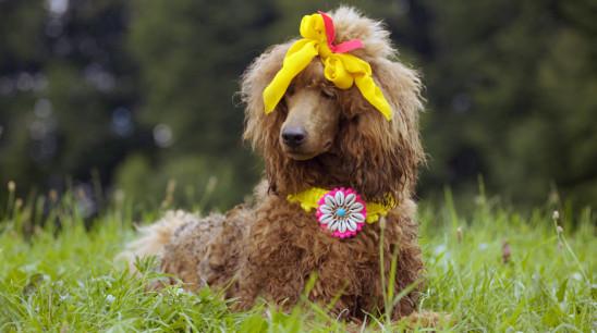 Sendungsbild: Racko – Ein Hund für alle Fälle