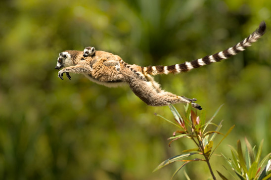 Sendungsbild: Madagaskar